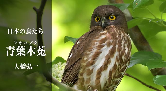 角川  -  俳句